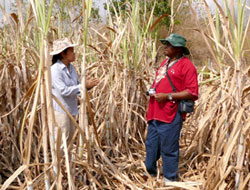 Jittin and Dr Noah Sitati in raided sugar-cane at Nong Hoi